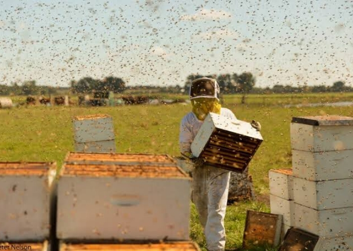 The Pollinators | A film about bees